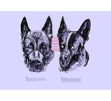 DOGS / I only have eyes for you Photographic Print