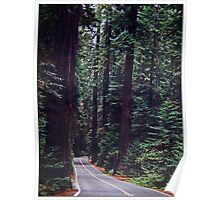 Roadway In The Redwoods Poster