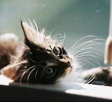 Kitten in Window by Grace Wiggins