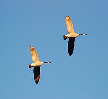 Flying Geese  by Vonnie Murfin