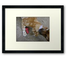 Mmmmm.....ear wax! Framed Print