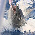 Jaws-Baraccuda Style by Stormy Brannan