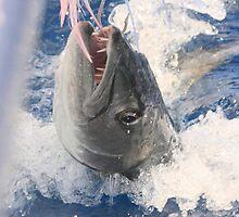 Jaws-Baraccuda Style by Serinidia