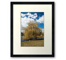 Willow Tree in Autumn Framed Print
