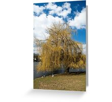 Willow Tree in Autumn Greeting Card
