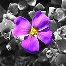 purple flower on a black canvas by harryland93