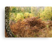 Autumn Woodland Cannock Chase Canvas Print