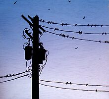 Birds on a Wire by linzyart