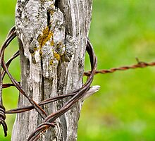 Rusty Barbed Wire by Nick Conde-Dudding