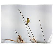 Tiny Bird, Big Voice Poster