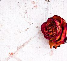 Lonelyness by Gabor Pozsgai