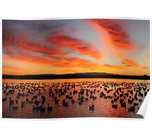 Sunrise at Bosque del Apache Poster