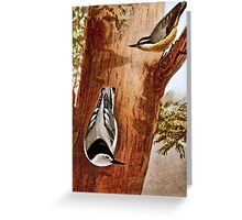Red-breasted nuthatch and White-breasted nuthatch Greeting Card