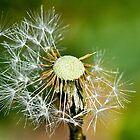 Seeds Of Maturity by John  Kowalski