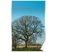 Solitary Tree on a Winter Evening Poster