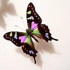 Pretty Butterfly by Rosalie Scanlon