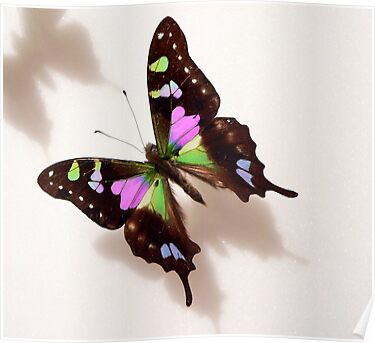 Pretty Butterfly by Rosalie Scanlon