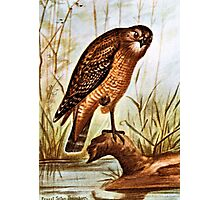 Red Shouldered Hawk art Photographic Print