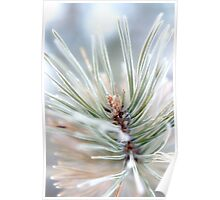 Pine needles covered in frost - 2 Poster