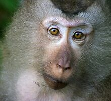 Macaque Monkey by openyourap