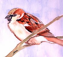 House Sparrow    by Anne Guimond