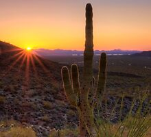 Desert Sunset by Justin Baer