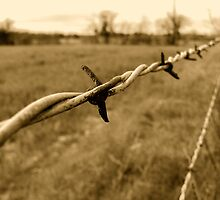 Barbed Wire by Nick Conde-Dudding