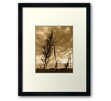 Broom Brush Framed Print