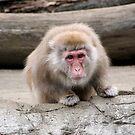Monkey Stare by mjds