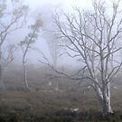Misty - Cradle Mountain by Bevellee