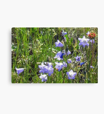 """Harebells"" -Prairie Wildflower Series Canvas Print"
