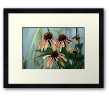 Garden Time Framed Print