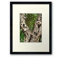 Maturity has it's Lumps and Bumps Framed Print