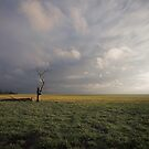 I Stand Alone by David Haworth
