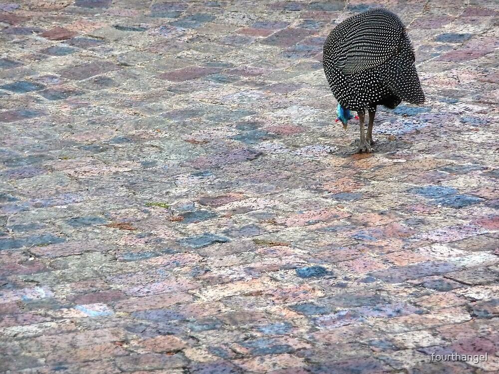 Pecking by fourthangel