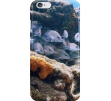 Reef Fish on a Shipwreck, Bahamas Sea iPhone Case/Skin