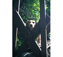 Doggie Stile Photographic Print