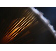 Backlight Mushroom Photographic Print