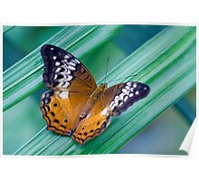 Cruiser Two - Kuranda butterfly sanctuary Poster