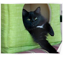 Cat House In Green  Poster