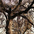 Trees, Branches, Sky  March 7, 2010 by Ivana Redwine