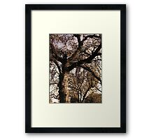 Trees, Branches, Sky – March 7, 2010 Framed Print