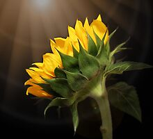 Shine Your Light on Me by Judy Vincent