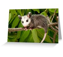 Baby Opossum  Greeting Card