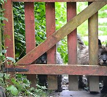 Terriers at the Gate by LucindaMeow