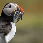 Puffin, Isle of May by Michael Hunter