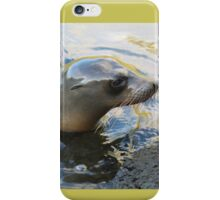 Galapagos Sea Lion iPhone Case/Skin