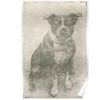 Henry the Boston terrier  Poster