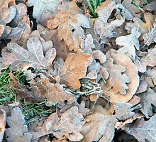 Fallen leaves by amylw1