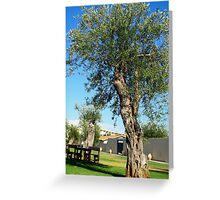 Old olive trees Greeting Card